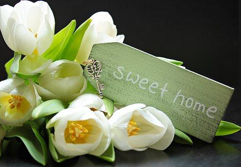 tulips-2091612__340