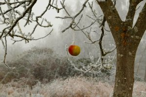 winter-2186459__340