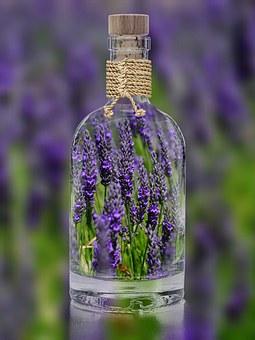 lavender-1490788__340