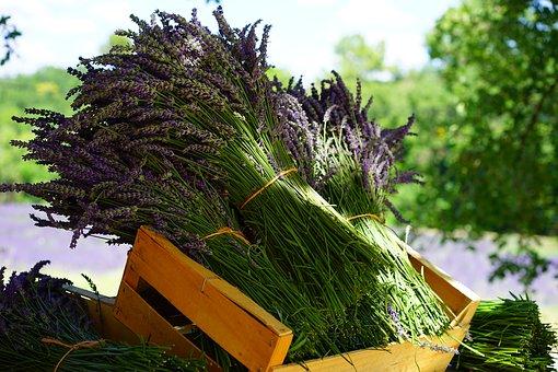 lavender-1595608__340