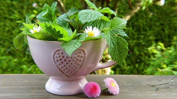 herbs-2232640__340