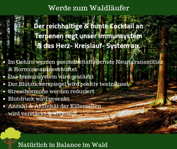 Werde zum Waldläufer