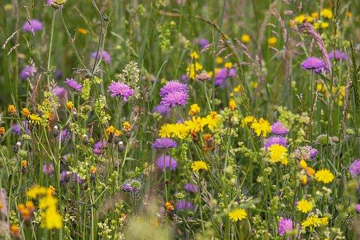 wild-flower-meadow-3386014__340
